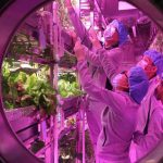 В Китае стартовал эксперимент по симуляции жизни на Луне
